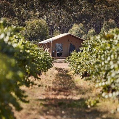 Luxury safari tent - vineyard