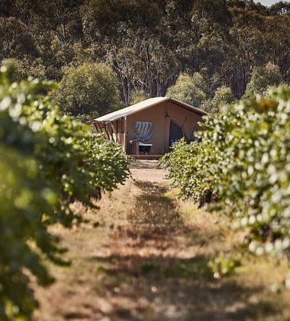 Luxury Lodge vineyard