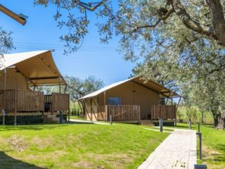 YALA_Sunshine_at_the_campsite_with_trees - safaritenten en glamping lodges